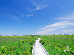 琵琶瀬木道と青空