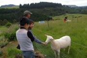 ニュージーランド6日目写真03