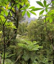 ニュージーランド8日目写真03