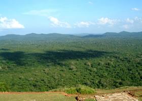 スリランカ2日目写真15