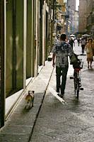 よく見られる犬の散歩風景